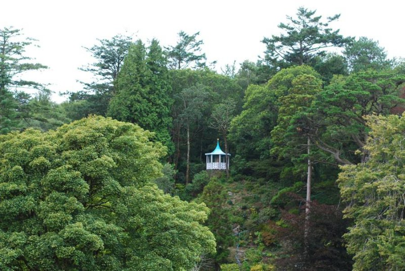 portmeirion-forest