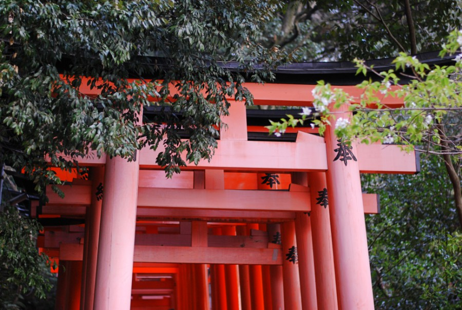 red torii gates japan